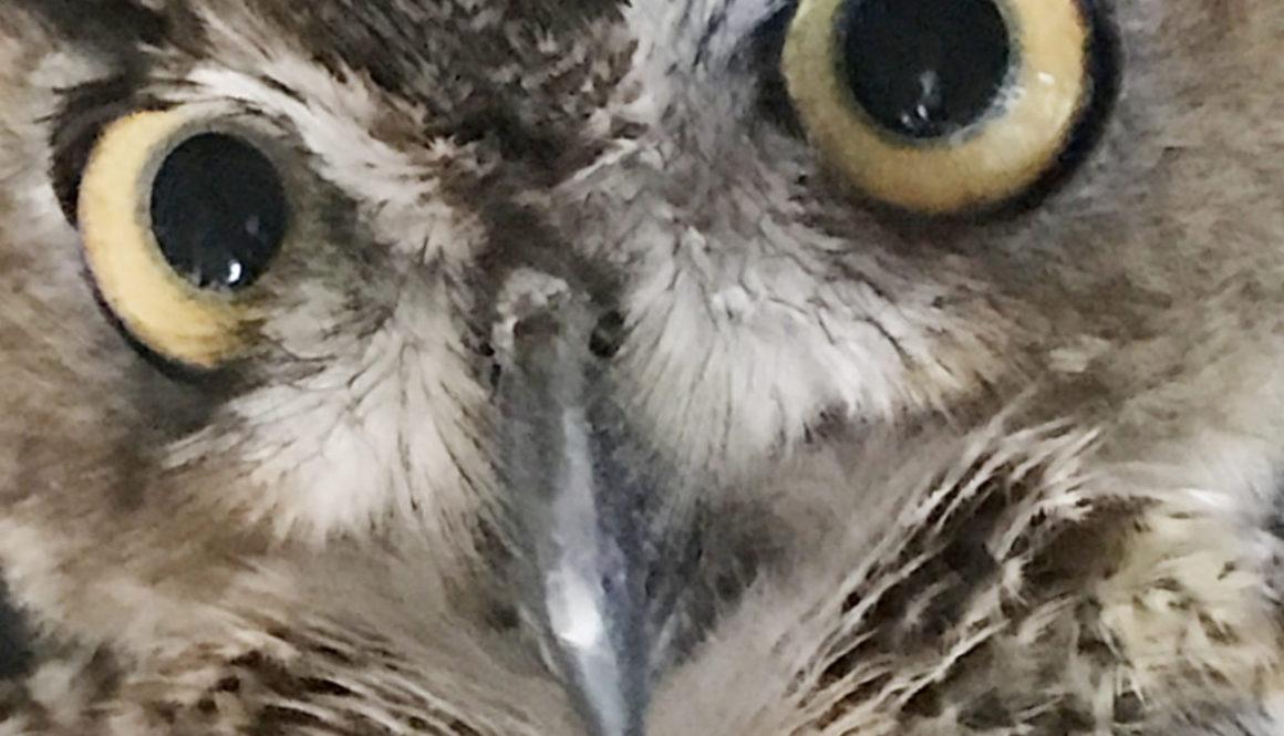 OwlThmb